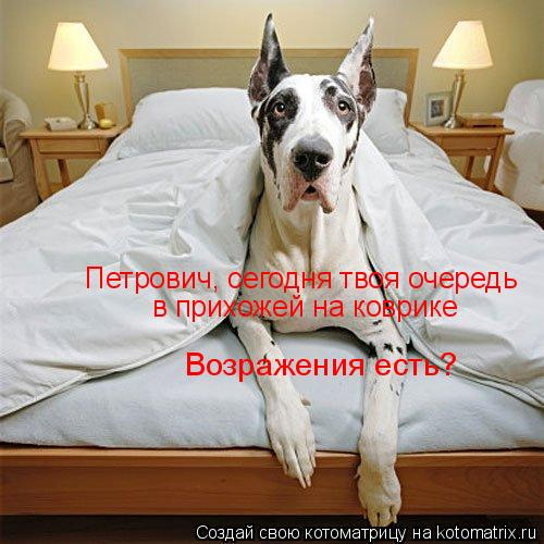 Котоматрица: Петрович, сегодня твоя очередь в прихожей на коврике Возражения есть?