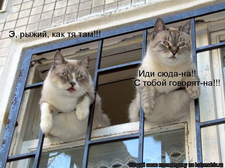 Котоматрица: Э, рыжий, как тя там!!! Иди сюда-на!! С тобой говорят-на!!!