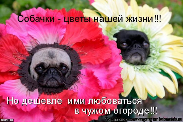 Котоматрица: Собачки - цветы нашей жизни!!! Но дешевле  ими любоваться  в чужом огороде!!!