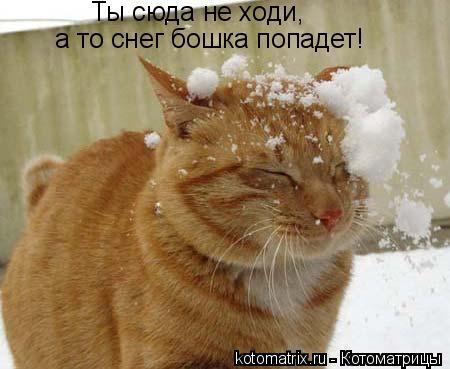 Котоматрица: Ты сюда не ходи,  а то снег бошка попадет!