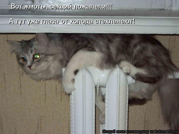 Котоматрица: Вот жмоты, секций пожалели!!! А тут уже глаза от холода стекленеют!