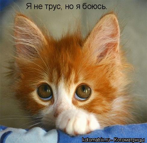 Котоматрица: Я не трус, но я боюсь. Я не трус, но я боюсь.
