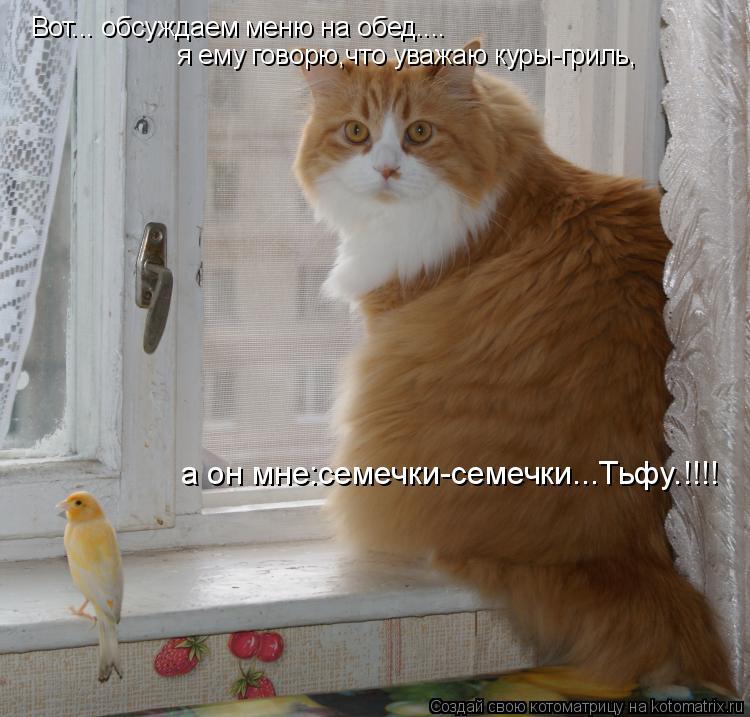 Котоматрица: Вот... обсуждаем меню на обед.... я ему говорю,что уважаю куры-гриль, а он мне:семечки-семечки...Тьфу.!!!!