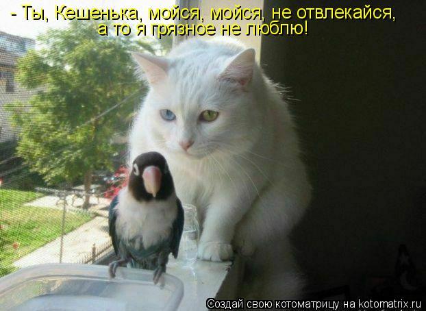 Котоматрица: - Ты, Кешенька, мойся, мойся, не отвлекайся, а то я грязное не люблю!
