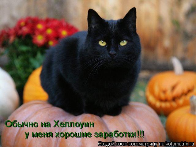 Котоматрица: Обычно на Хеллоуин  у меня хорошие заработки!!!