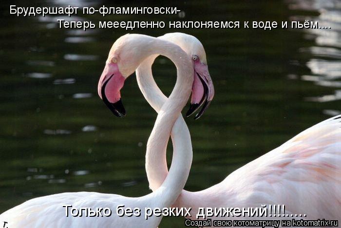 Котоматрица: Брудершафт по-фламинговски- Только без резких движений!!!!..... Теперь мееедленно наклоняемся к воде и пьём....