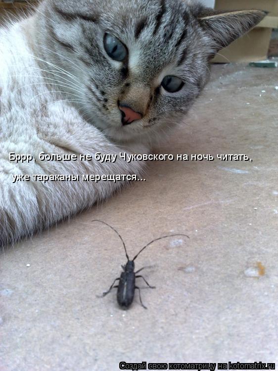 Котоматрица: Бррр, больше не буду Чуковского на ночь читать, уже тараканы мерещатся...