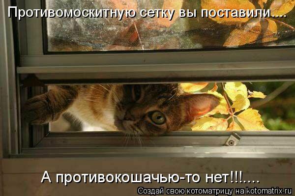 Котоматрица: А противокошачью-то нет!!!.... Противомоскитную сетку вы поставили....