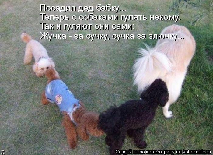 Котоматрица: Посадил дед бабку... Теперь с собаками гулять некому. Так и гуляют они сами: Жучка - за сучку, сучка за злючку...