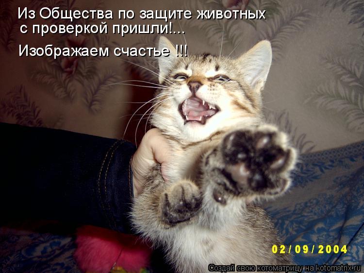 Котоматрица: Из Общества по защите животных  с проверкой пришли!... Изображаем счастье !!!