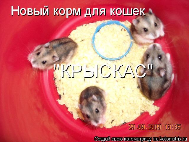 "Котоматрица: Новый корм для кошек ""КРЫСКАС"""