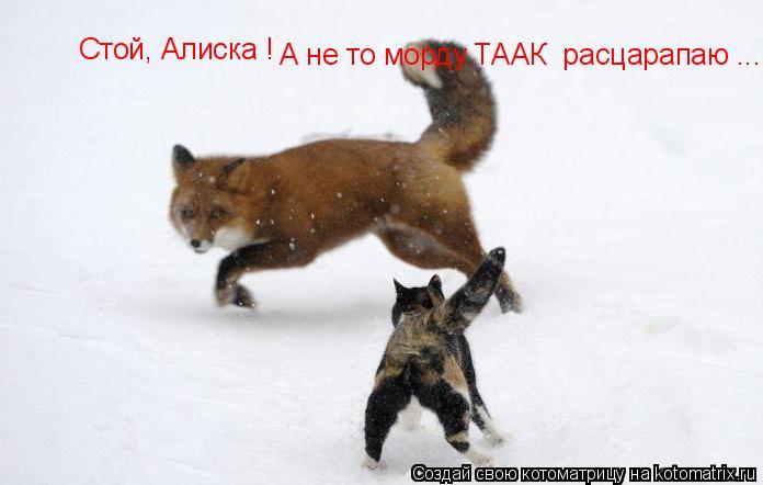 Котоматрица: Стой, Алиска ! А не то морду ТААК  расцарапаю ....