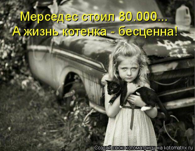 Котоматрица: Мерседес стоил 80.000... А жизнь котенка - бесценна!