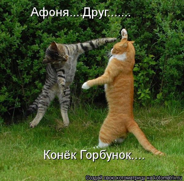 Котоматрица: Афоня....Друг....... Конёк Горбунок....