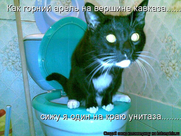 Котоматрица: Как горний арёль на вершине кавказа........... сижу я один на краю унитаза........