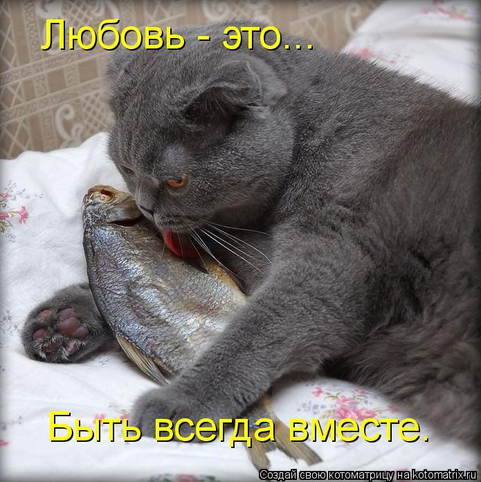 Котоматрица: Любовь - это... Быть всегда вместе.
