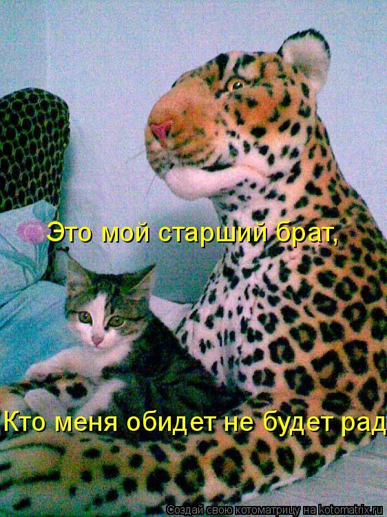 Котоматрица: Это мой старший брат, Кто меня обидет не будет рад!