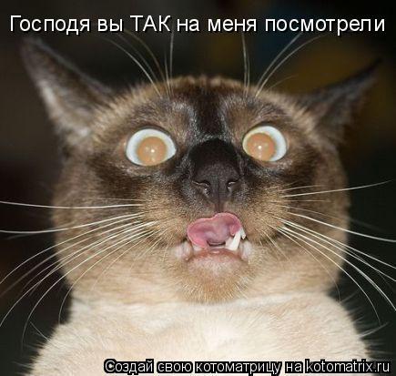 Котоматрица: Господя вы ТАК на меня посмотрели Господя вы ТАК на меня посмотрели