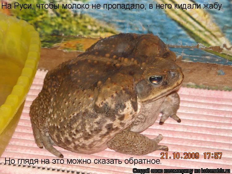 Котоматрица: На Руси, чтобы молоко не пропадало, в него кидали жабу. Но глядя на это можно сказать обратное.
