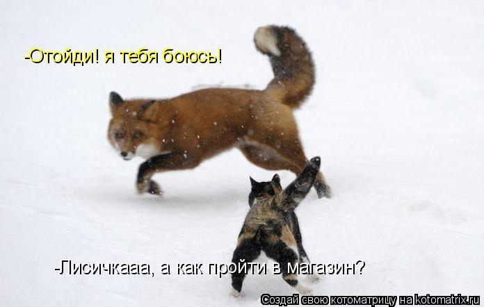 Котоматрица: -Лисичкааа, а как пройти в магазин? -Отойди! я тебя боюсь!