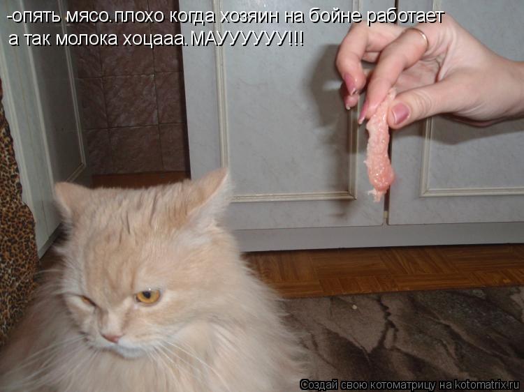 Котоматрица: -опять мясо.плохо когда хозяин на бойне работает а так молока хоцааа.МАУУУУУУ!!!