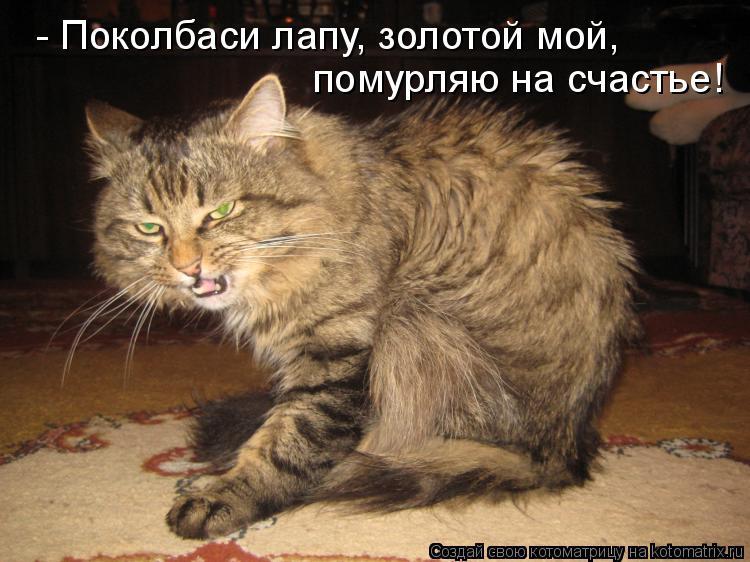Котоматрица: - Поколбаси лапу, золотой мой, помурляю на счастье!