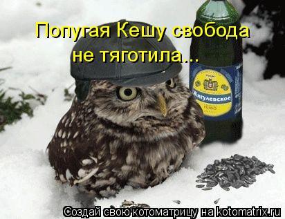 Котоматрица: Попугая Кешу свобода не тяготила...
