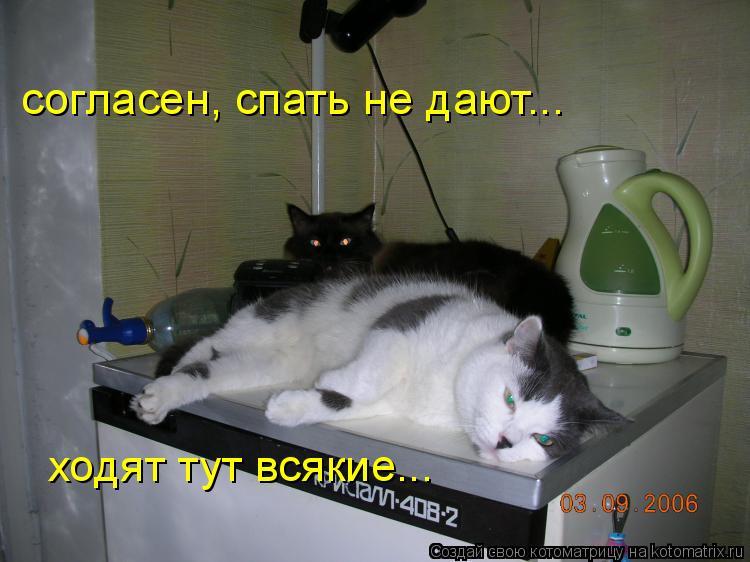 Котоматрица: ходят тут всякие... согласен, спать не дают...