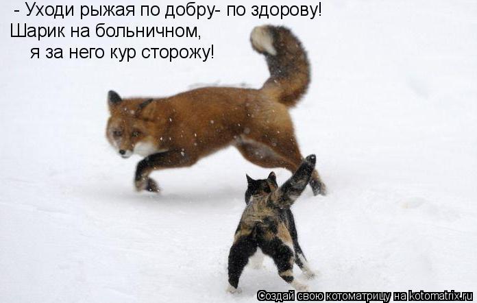 Котоматрица: - Уходи рыжая по добру- по здорову!  Шарик на больничном,  я за него кур сторожу!