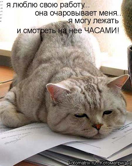Котоматрица: я люблю свою работу... она очаровывает меня... я могу лежать  и смотреть на нее ЧАСАМИ!