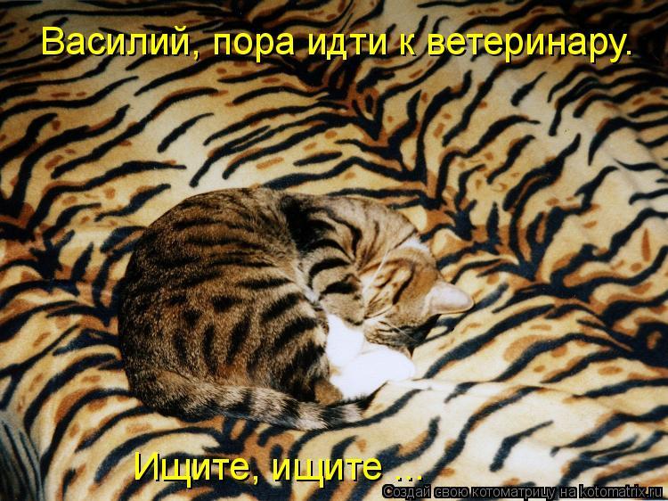 Котоматрица: Василий, пора идти к ветеринару. Ищите, ищите ...