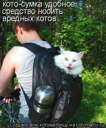 Котоматрица: кото-сумка удобное средство носить  вредных котов вредных котов