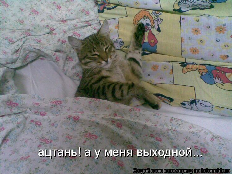 Котоматрица: ацтань! а у меня выходной...