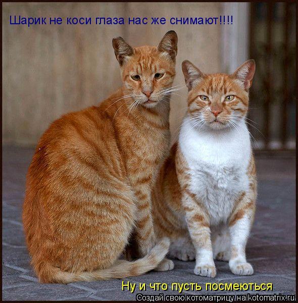 Котоматрица: Ну и что пусть посмеються Шарик не коси глаза нас же снимают!!!!