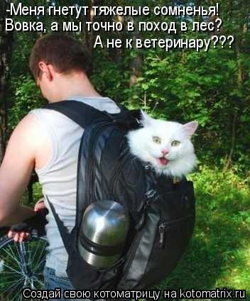 Котоматрица: -Меня гнетут тяжелые сомненья! Вовка, а мы точно в поход в лес? А не к ветеринару???