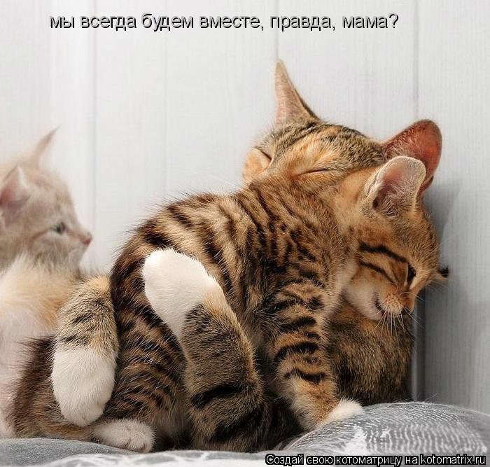 Котоматрица: мы всегда будем вместе, правда, мама?