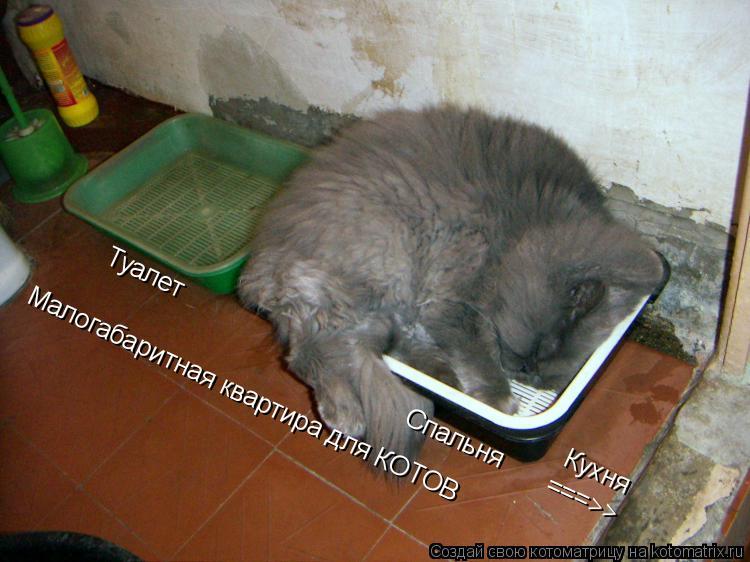 Котоматрица: Туалет Спальня ===>> Кухня Малогабаритная квартира для КОТОВ