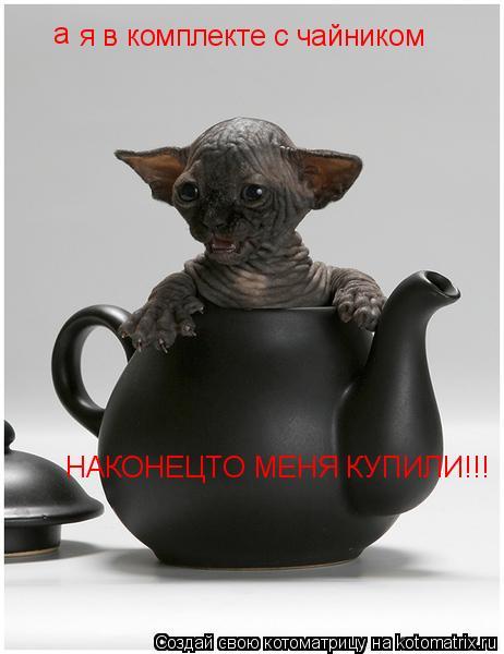 Котоматрица: я в комплекте с чайником НАКОНЕЦТО МЕНЯ КУПИЛИ!!! а