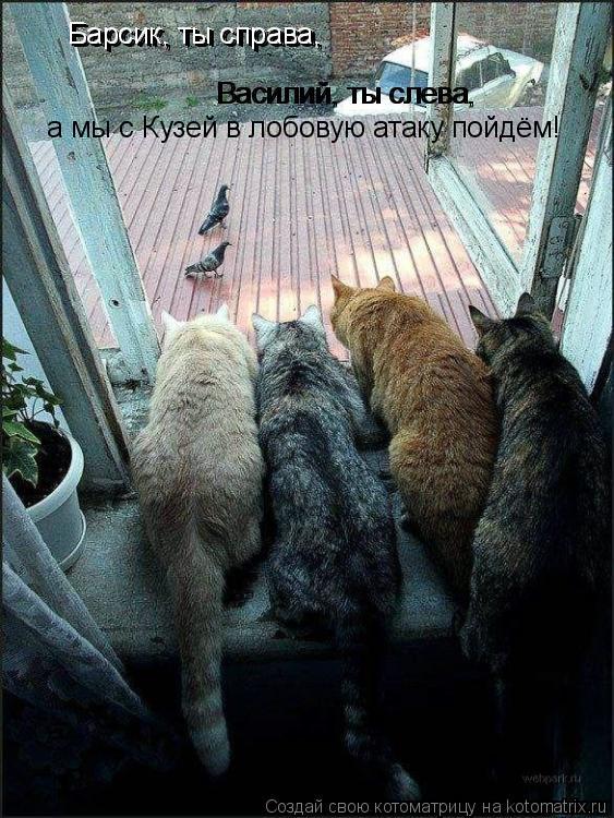 Котоматрица: Василий, ты слева, Василий, ты слева, Барсик, ты справа, Барсик, ты справа, а мы с Кузей в лобовую атаку пойдём!