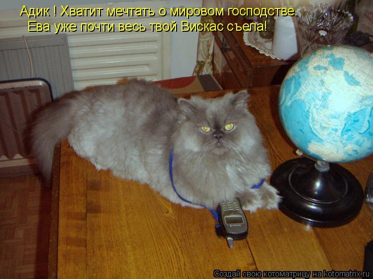 Котоматрица: Адик ! Хватит мечтать о мировом господстве. Ева уже почти весь твой Вискас съела!