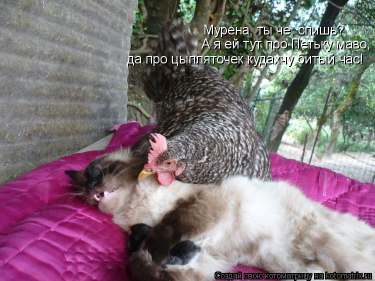 Котоматрица: Мурена, ты че, спишь? А я ей тут про Петьку маво,  да про цыпляточек кудахчу битый час!
