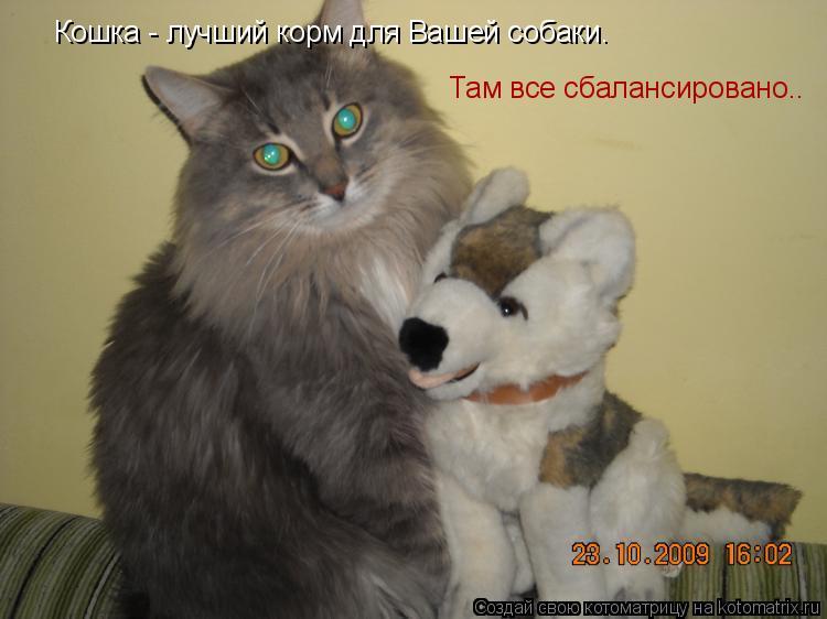Котоматрица: Кошка - лучший корм для Вашей собаки.  Там все сбалансировано..