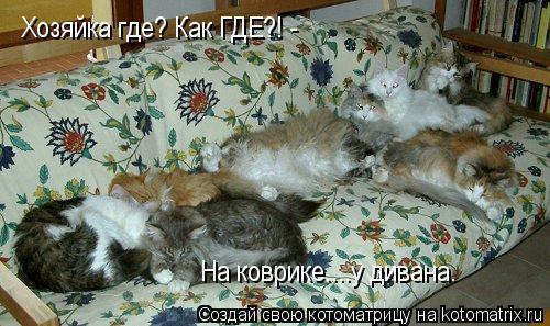 Котоматрица: Хозяйка где? Как ГДЕ?! - На коврике....у дивана.