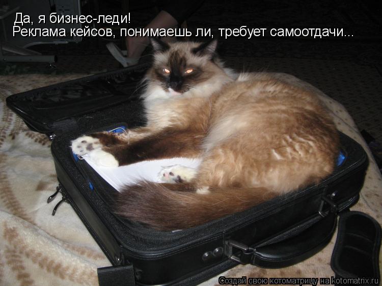 Котоматрица: Да, я бизнес-леди!  Реклама кейсов, понимаешь ли, требует самоотдачи...