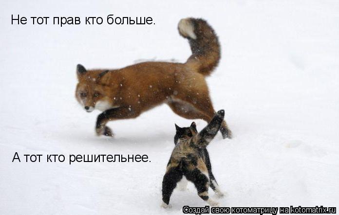 Котоматрица: Не тот прав кто больше. А тот кто решительнее.
