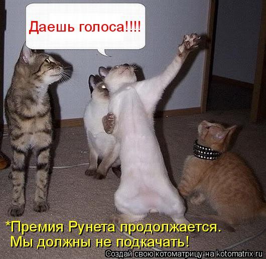 Котоматрица: Даешь голоса!!!! *Премия Рунета продолжается. Мы должны не подкачать!