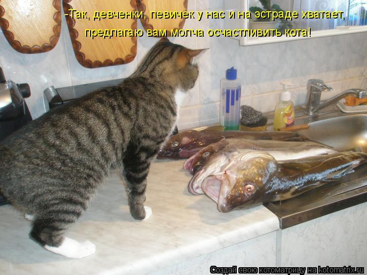 Котоматрица: -Так, девченки, певичек у нас и на эстраде хватает, предлагаю вам молча осчастливить кота!