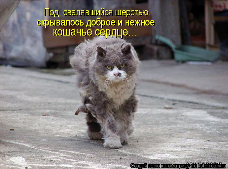 Котоматрица: Под  свалявшийся шерстью скрывалось доброе и нежное кошачье сердце...
