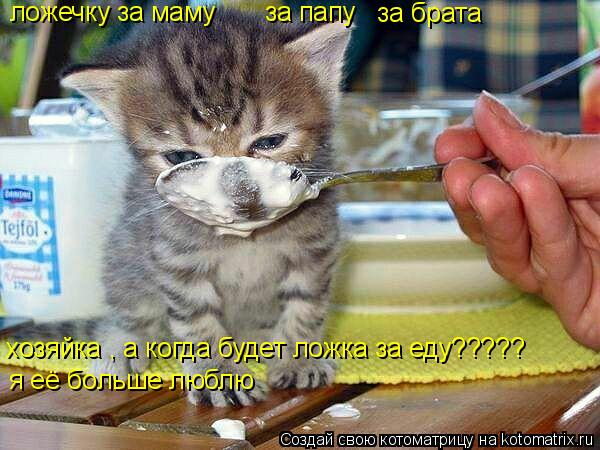 Котоматрица: ложечку за маму    за папу за брата хозяйка , а когда будет ложка за еду????? я её больше люблю