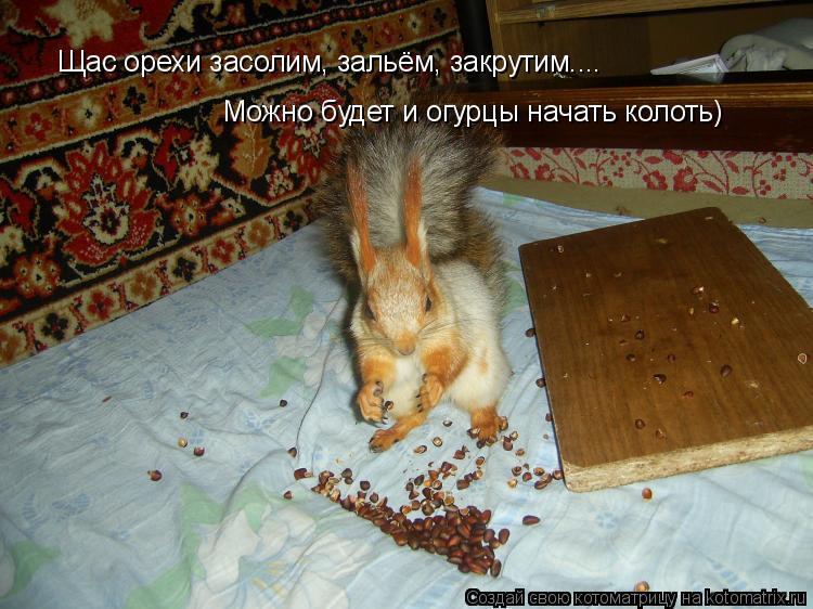 Котоматрица: Щас орехи засолим, зальём, закрутим.... Можно будет и огурцы начать колоть)